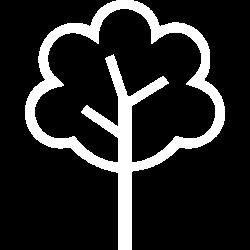 noun_Tree_1073902_ffffff